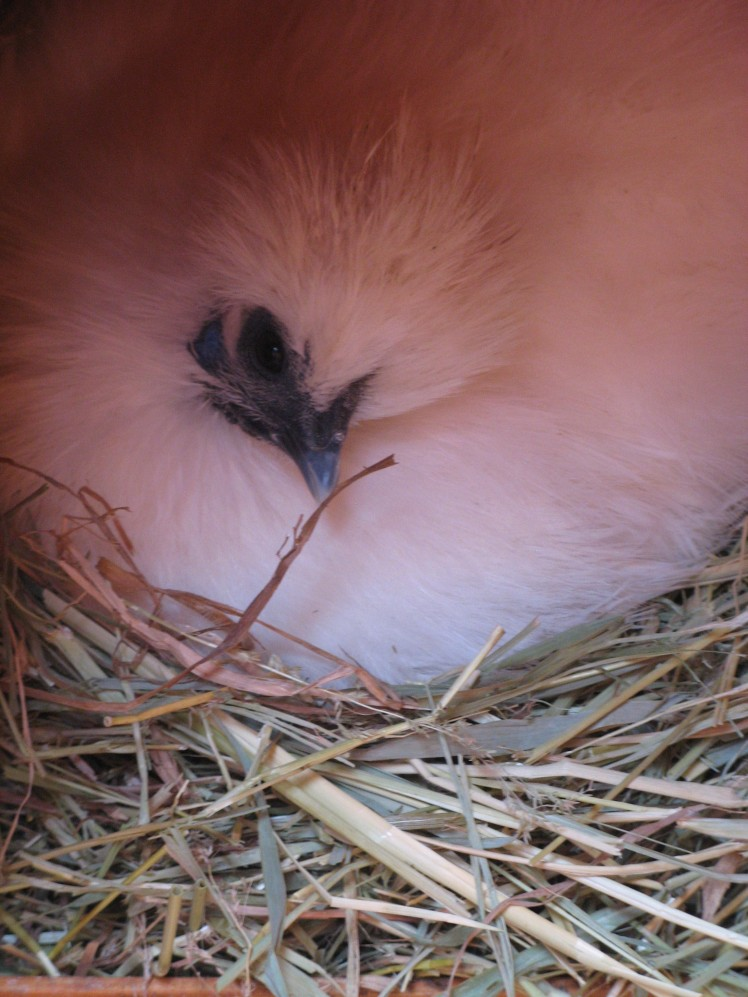 Frk Hedwig